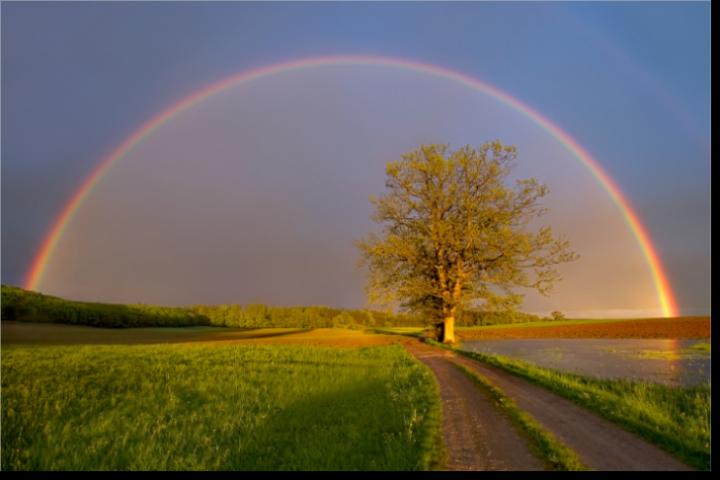 Bildergebnis für regenbogenbrücke